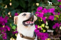 Abby IMG_0091-960