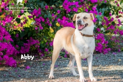 Abby IMG_0101-960