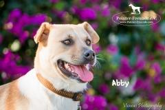 Abby IMG_0111-960