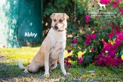 Abby IMG_0187-960