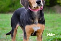 Abby DSC_0560-960