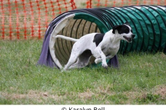 Karalyn Bell_Agility_Name unter die Fotos (3)