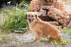 Bailey IMG_0832-960