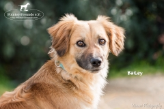 Bailey IMG_0867-960