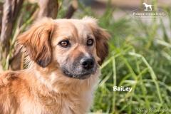 Bailey IMG_0916-960