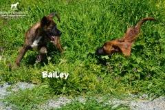 bailey_2