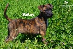 bailey_3