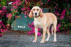 Bella IMG_0441-960
