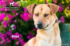 Brad IMG_0368-960