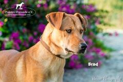 Brad IMG_0429-960