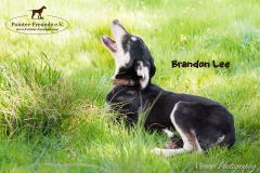 Brandon Lee IMG_2902-960