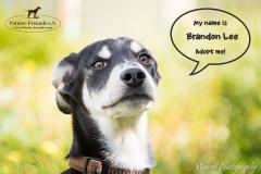 Brandon Lee IMG_2917-960