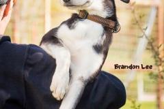Brandon Lee IMG_2944-960