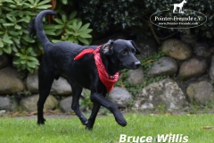 BrucewillismitLogo6