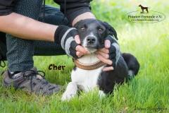 Cher IMG_3116-960
