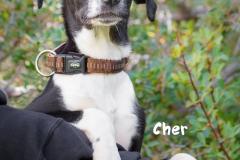Cher IMG_3132-960