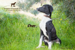 Cher IMG_3133-960