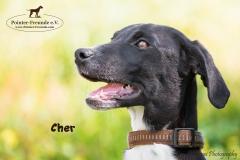 Cher IMG_3196-960