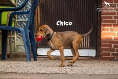 chico_1