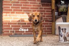 chico_4