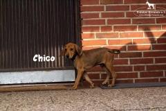 chico_5