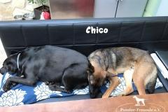 Chico_auf_dem_Sofa_mit_buddy