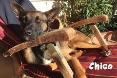 chico_auf_dem_stuhl
