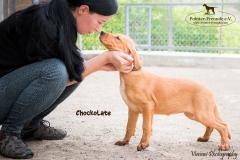 Chockolate IMG_0210-960