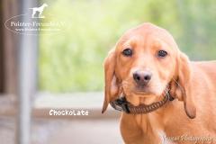 Chockolate IMG_0228-960