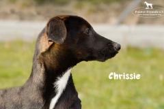 chrissie_3
