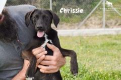 chrissie_5