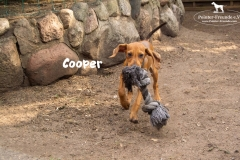 cooper_1