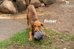 cooper_2