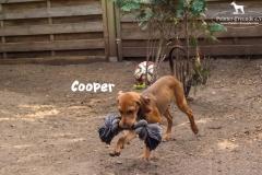 cooper_3