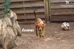 cooper_5