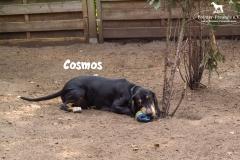 cosmos_4