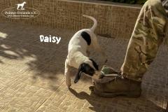 daisy_2