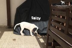 daisy_4