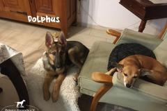 dolphus_3