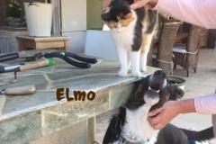elmo_10