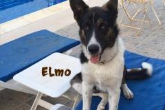 elmo_11