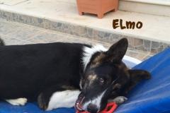 elmo_12