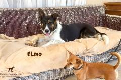 elmo_4