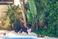 elmo_7