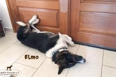 elmo_8