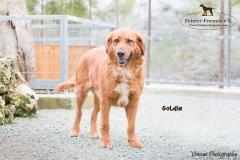 Goldie IMG_0135-960
