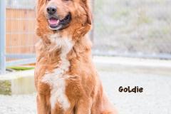 Goldie IMG_0151-960