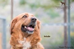 Goldie IMG_0190-960