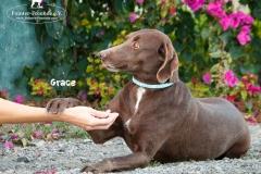 Grace IMG_0373-960