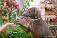 Grace IMG_0401-960